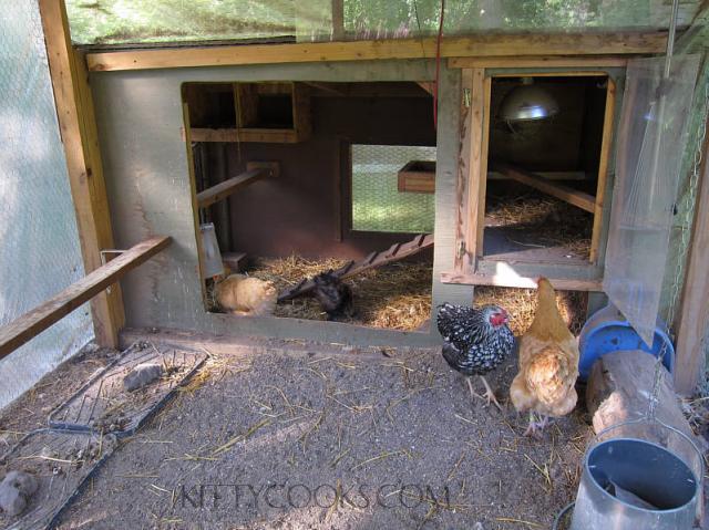 http://www.backyardchickens.com/forum/uploads/59651_coop_pic.jpg