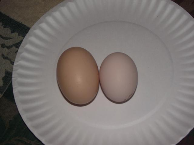 59947_big_egg_mabey_double_001.jpg