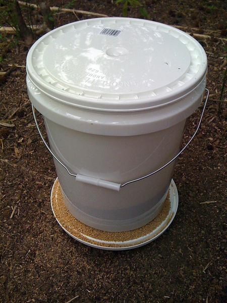 I then filled the bucket with feed and left it for the chickens. I think a 5 gallon bucket will hold about 25lbs of feed.