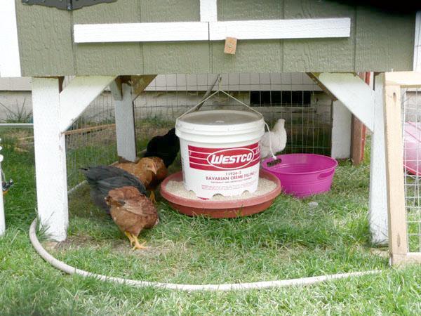 tylermckee s homemade chicken feeder   backyard chickens