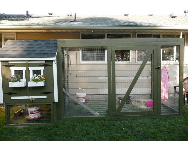 Diy coop small backyard chicken coop for Small chicken coop with run