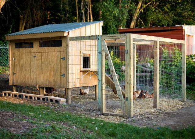 Pallet coop hybrid backyard chickens community for Pallet chicken coup