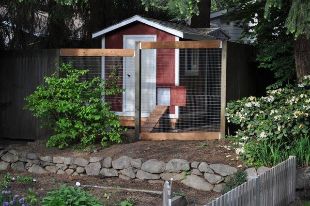 Tomg's Chicken Coop - BackYard Chickens Community