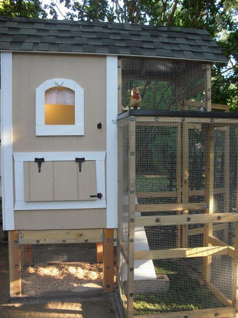 http://www.backyardchickens.com/forum/uploads/61694_sdc10672.jpg