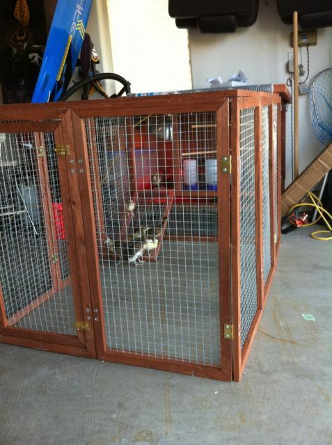 http://www.backyardchickens.com/forum/uploads/61756_peachick_cage.jpg