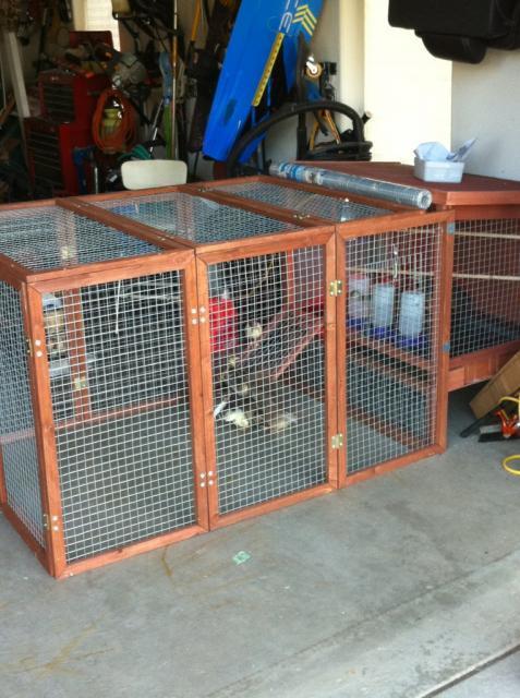 http://www.backyardchickens.com/forum/uploads/61756_peachick_cage_2.jpg