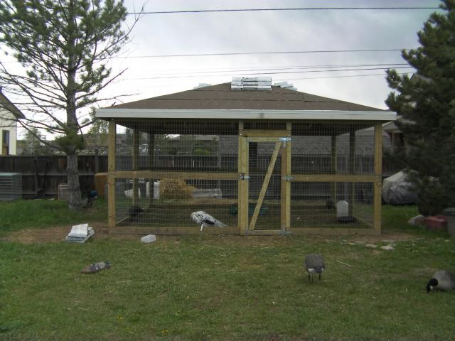 http://www.backyardchickens.com/forum/uploads/61756_picture_028.jpg