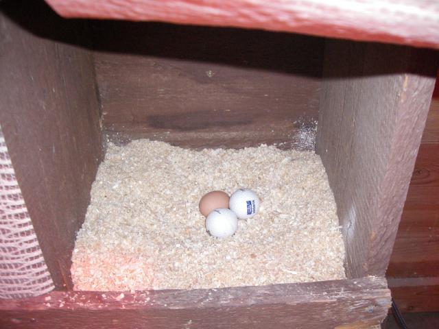 http://www.backyardchickens.com/forum/uploads/63203_imgp0617.jpg