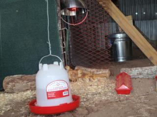 http://www.backyardchickens.com/forum/uploads/63768_biddies_new_brooder_001.jpg