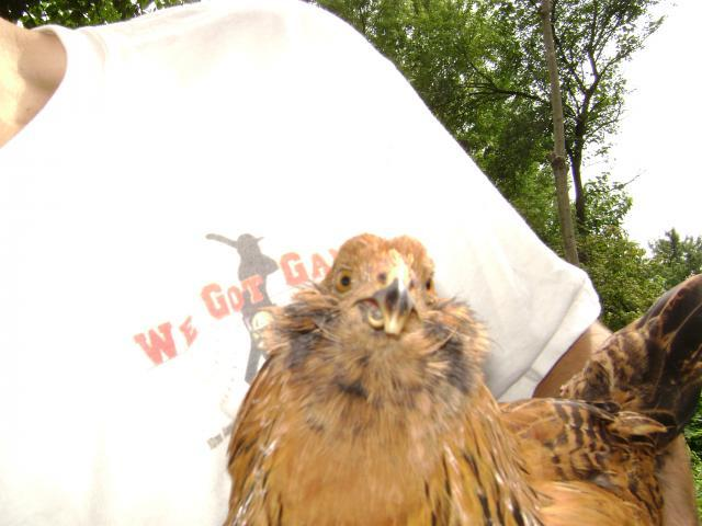 http://www.backyardchickens.com/forum/uploads/63816_brownies_beak.jpg