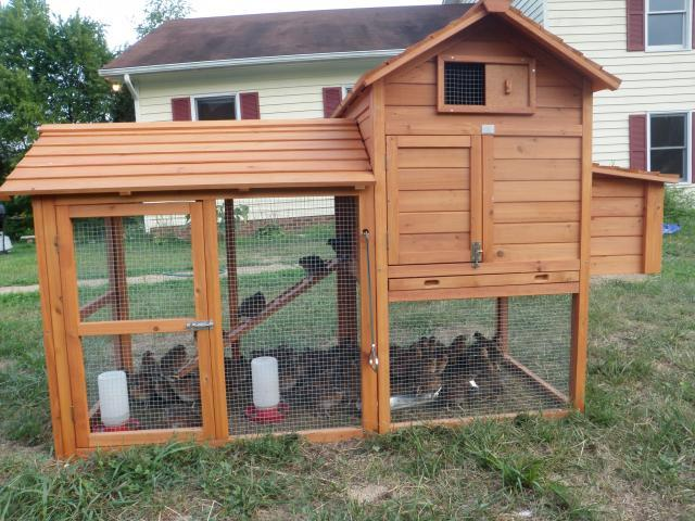 how to make chicken coop predator proof
