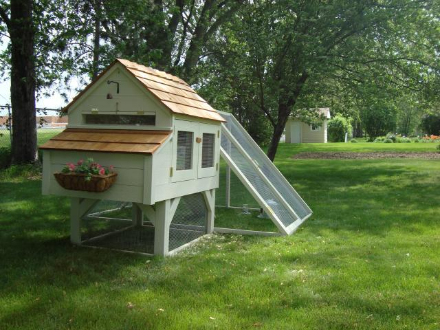 Wisconsin Winters Heat Lamp Or Not Backyard Chickens Learn How To Raise Chickens