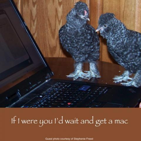 64832_march_3_2011_workday_chickens.jpg