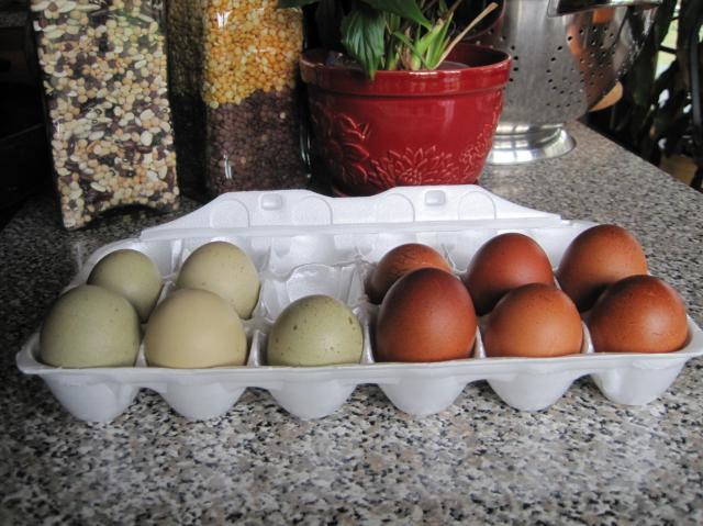 65410_eggs.jpg