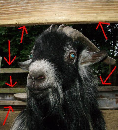 http://www.backyardchickens.com/forum/uploads/6612_goat_pen.jpg