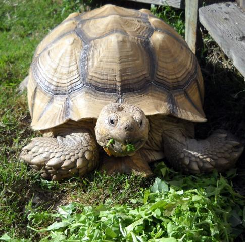 how to find a turtle in your backyard