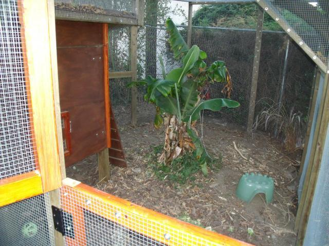 http://www.backyardchickens.com/forum/uploads/67166_73110_5.jpg