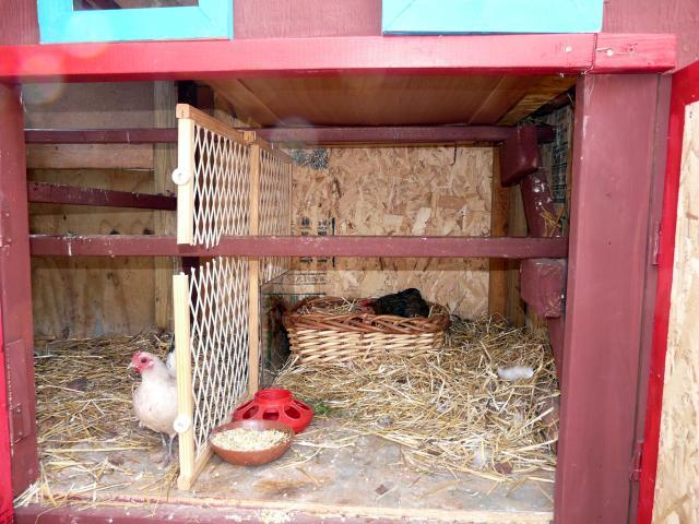 http://www.backyardchickens.com/forum/uploads/67374_broody_hen_003.jpg
