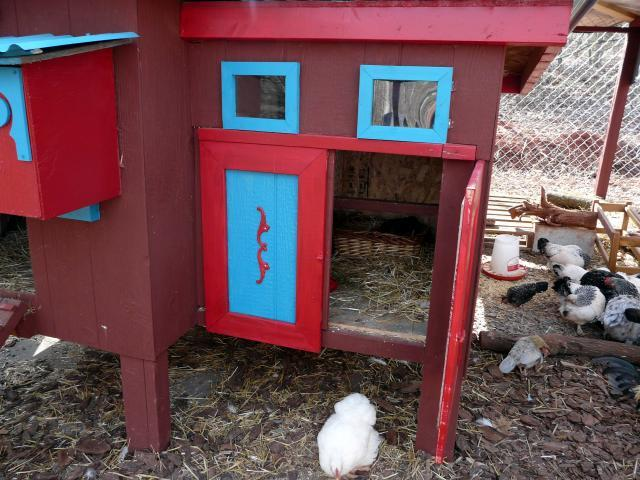 http://www.backyardchickens.com/forum/uploads/67374_broody_hen_017.jpg