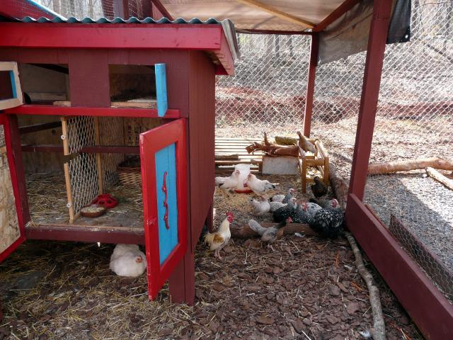 http://www.backyardchickens.com/forum/uploads/67374_broody_hen_061.jpg