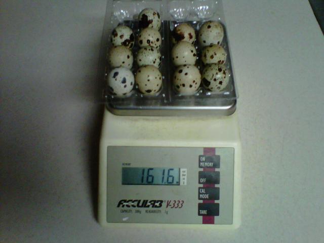 http://www.backyardchickens.com/forum/uploads/67513_img00134-20110719-0016.jpg