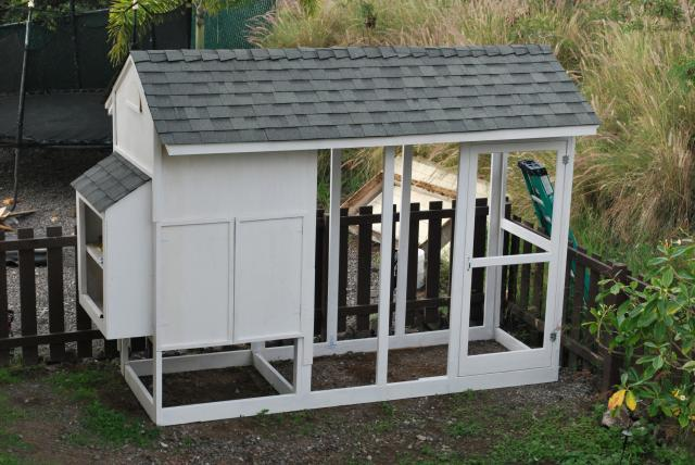 Kona Chicken Ohana S Chicken Coop Backyard Chickens