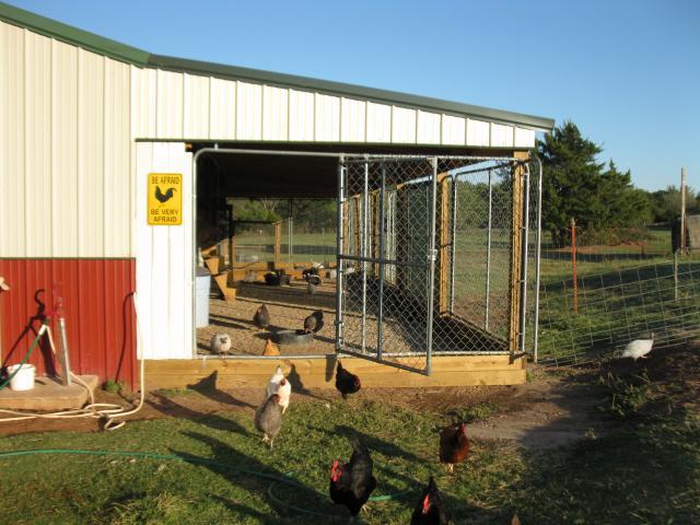 http://www.backyardchickens.com/forum/uploads/67664_new_pics_of_barn_chickens_001.jpg