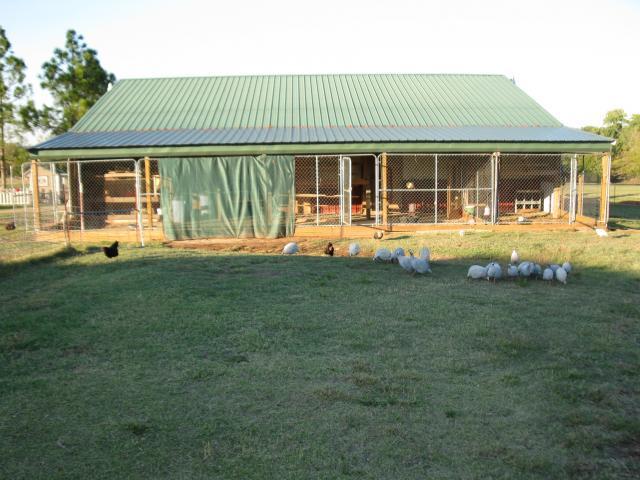 http://www.backyardchickens.com/forum/uploads/67664_new_pics_of_barn_chickens_005.jpg