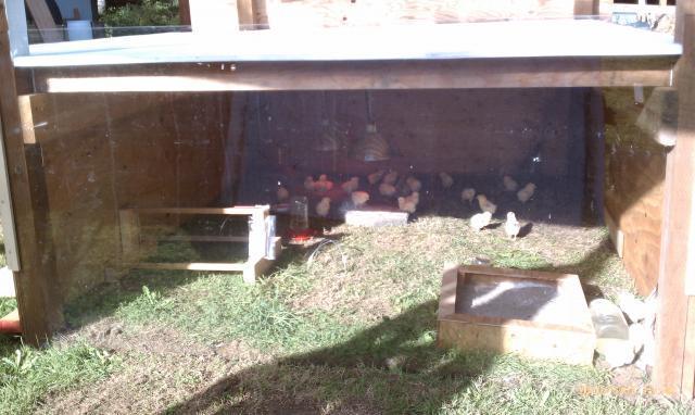 http://www.backyardchickens.com/forum/uploads/69192_imag0298.jpg