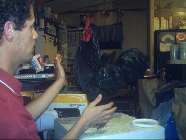 http://www.backyardchickens.com/forum/uploads/69260_java_005.jpg