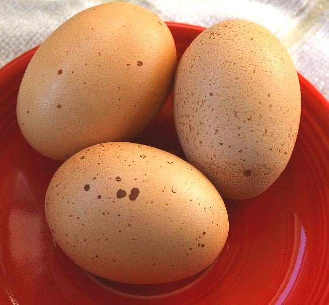 wow how to get a white merlo egg
