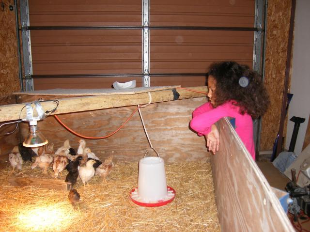 http://www.backyardchickens.com/forum/uploads/69833_dscf1991.jpg