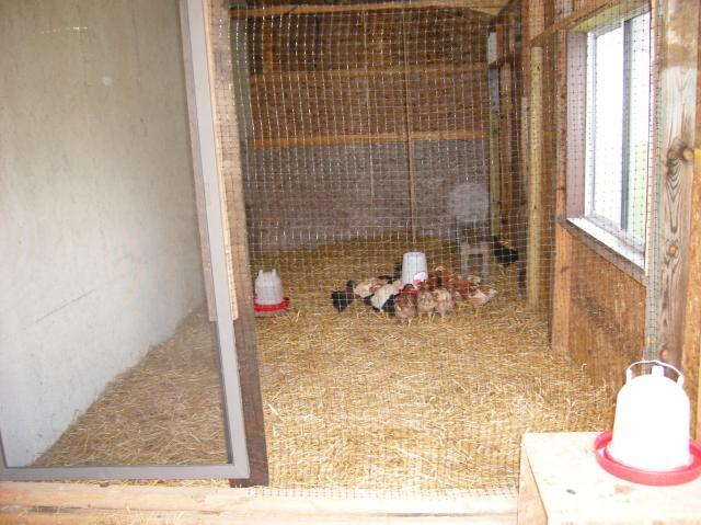 http://www.backyardchickens.com/forum/uploads/69833_dscf2028.jpg