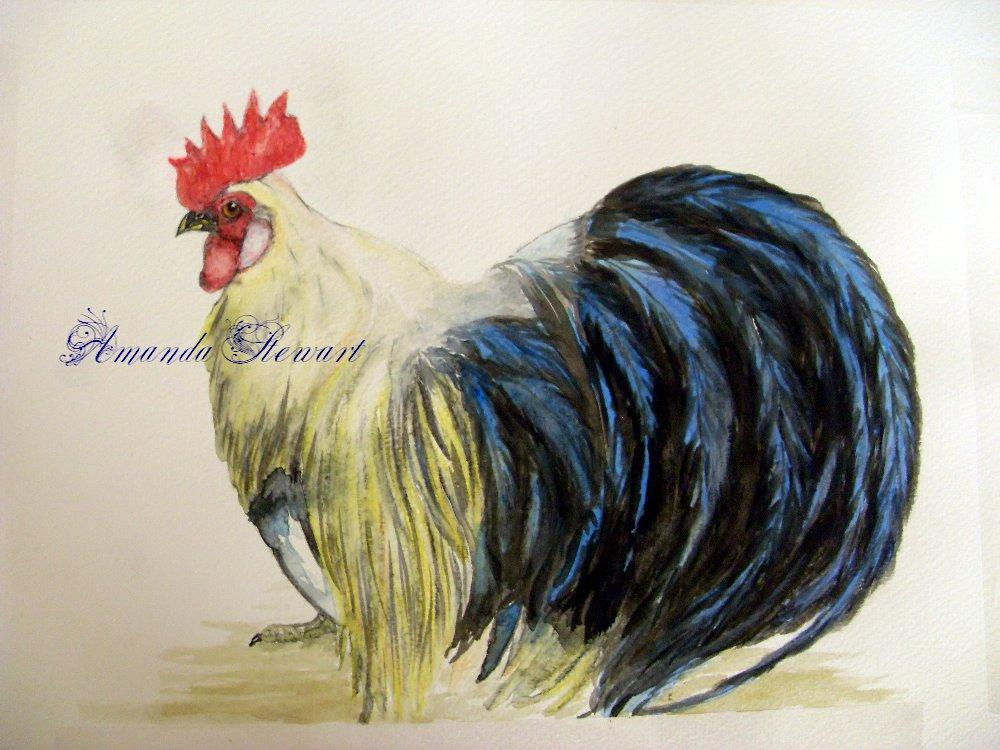http://www.backyardchickens.com/forum/uploads/70005_ohikiwatercolor.jpg