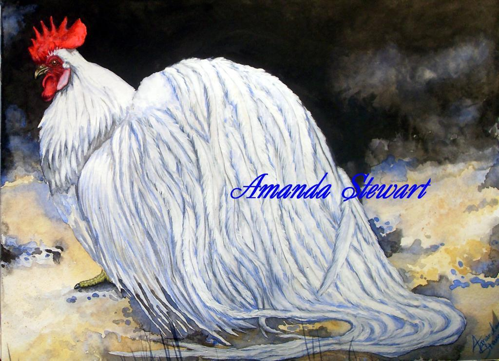 http://www.backyardchickens.com/forum/uploads/70005_ohikiwhitewatercolor.jpg