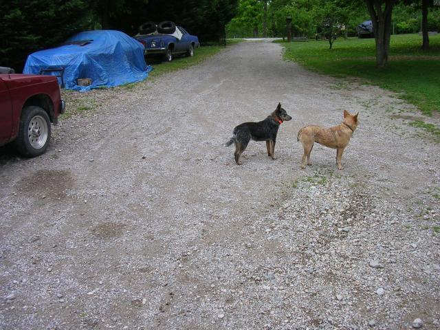 http://www.backyardchickens.com/forum/uploads/70399_sugar_foxie_5_2011.jpg