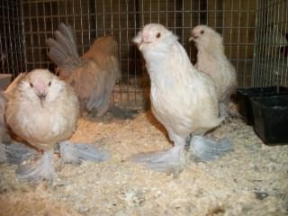 http://www.backyardchickens.com/forum/uploads/7083_100_0063_640x480.jpg