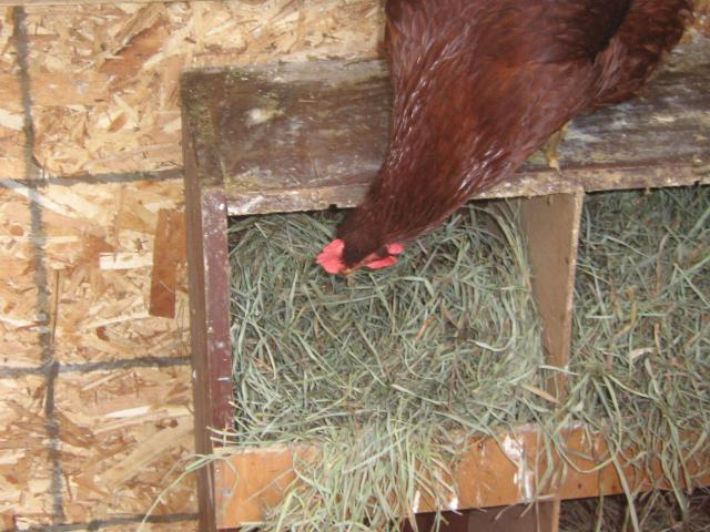 http://www.backyardchickens.com/forum/uploads/71035_img_2053.jpg