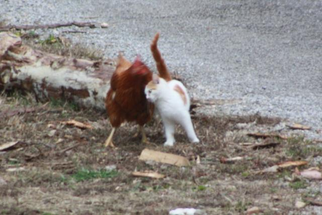 how to kill live bird that cat caught