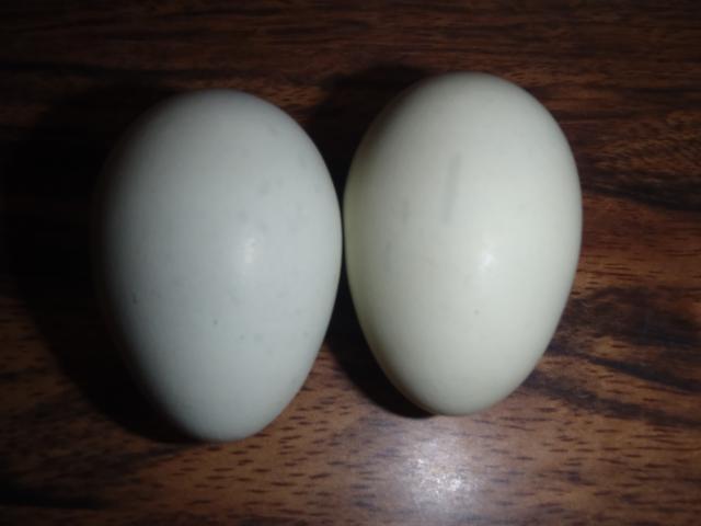 71540_bo_x_ee_eggs_001.jpg