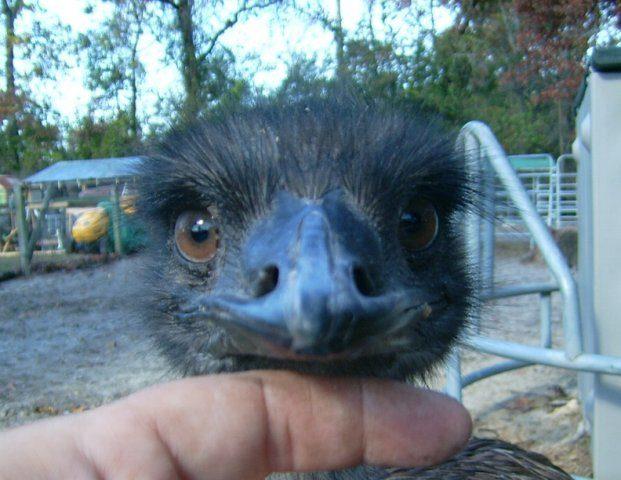 http://www.backyardchickens.com/forum/uploads/7205_jazzyseyes.jpg