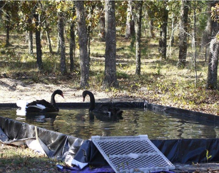 Tarp Pond Liner Qs