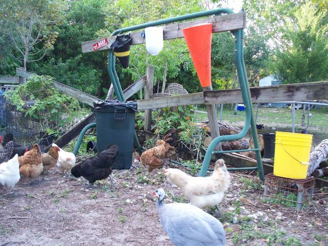 http://www.backyardchickens.com/forum/uploads/7277_processing_station_005.jpg