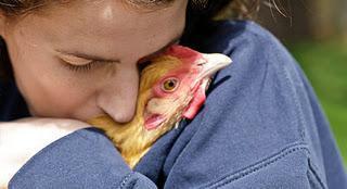 http://www.backyardchickens.com/forum/uploads/73070_i-q8tkbjw-s-1.jpg