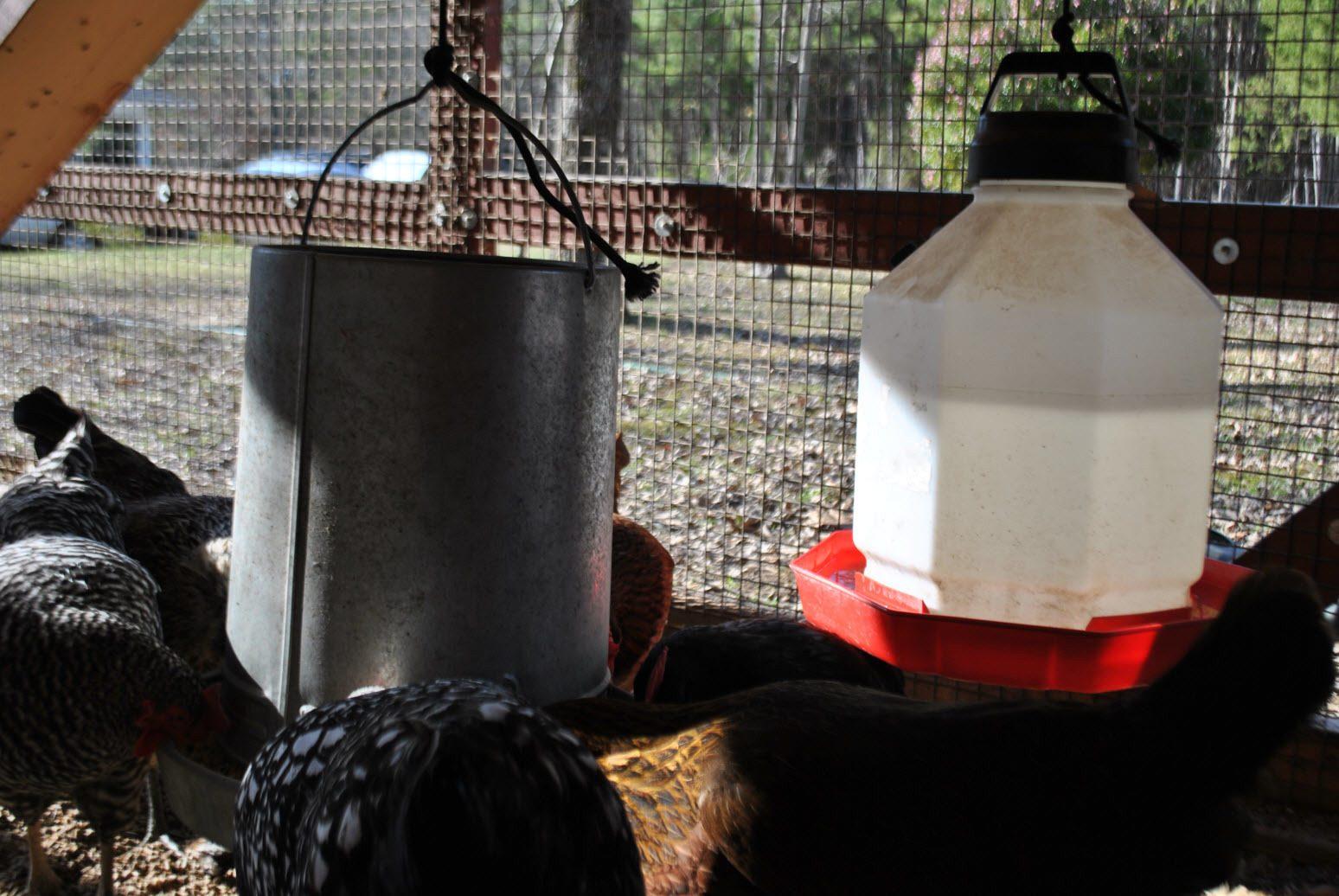 http://www.backyardchickens.com/forum/uploads/76677_dsc_0409.jpg