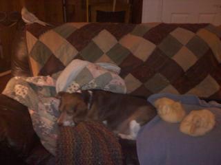 http://www.backyardchickens.com/forum/uploads/77028_couch_bunch.jpg
