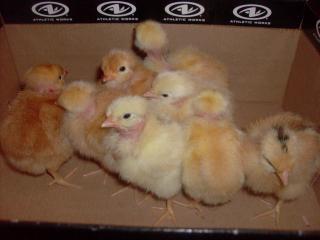 http://www.backyardchickens.com/forum/uploads/7892_hpim2500.jpg