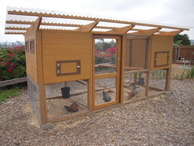 http://www.backyardchickens.com/forum/uploads/79897_dscn2856.jpg