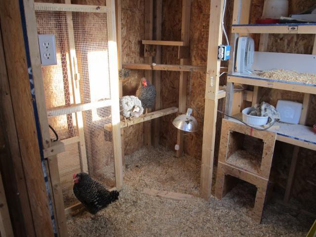 Inside Coop