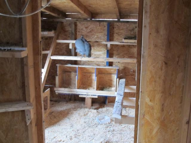 New roosts inside addition